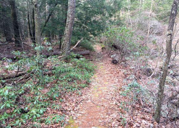 Hiking the Jarrett Trail in Fulton County, Pennsylvania