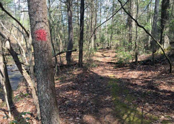 Blazes on the Jarrett Trail in SGL 53
