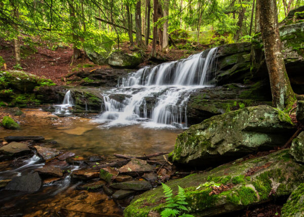 Logan Falls in the Allegheny National Forest