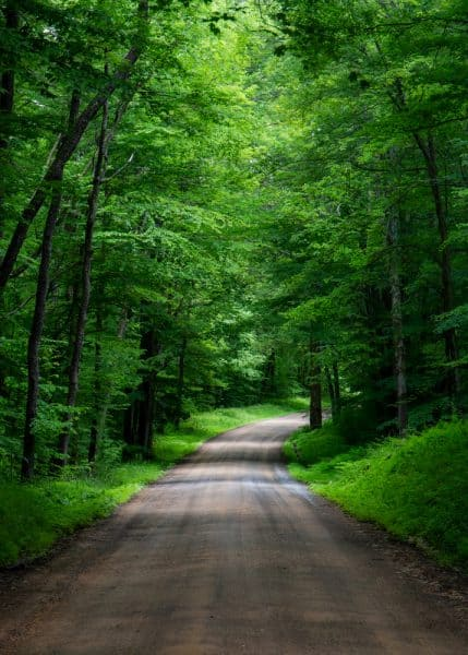 Dirt road in the Allegheny National Forest