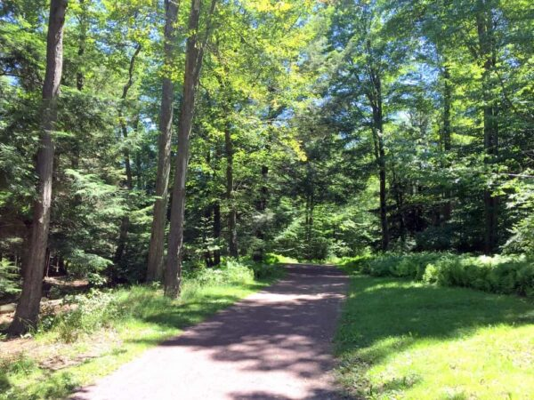 Beach Trail at Ricketts Glen State Park.