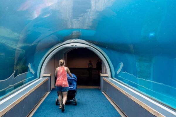 Walking paths through the PPG Aquarium