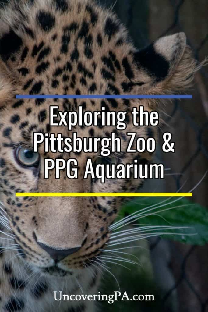 Exploring the Pittsburgh Zoo and PPG Aquarium in Pittsburgh, Pennsylvania
