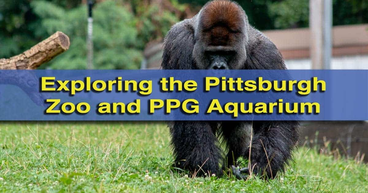 Pittsburgh Zoo and PPG Aquarium in Pittsburgh, PA