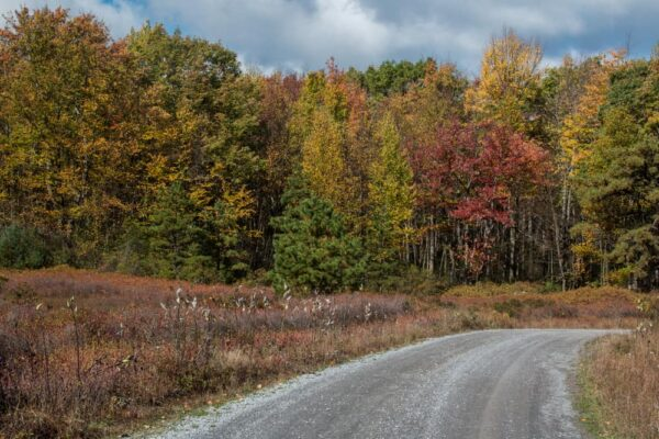 History of the Quehanna Wild Area in Pennsylvania