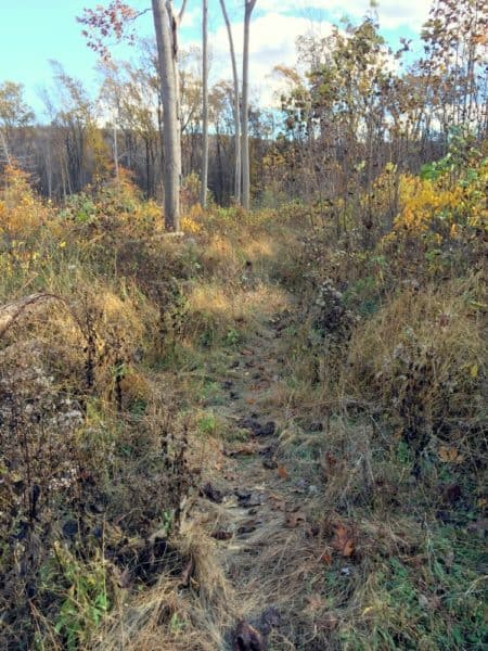 Trail to Stony Garden Ringing Rocks in Bucks County, PA