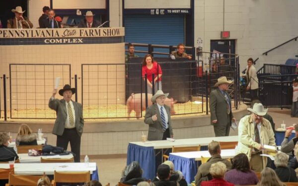 Livestock auction at the Pennsylvania Farm Show in Harrisburg, PA