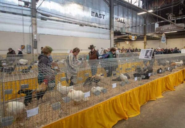 Competitions at the Farm Show in Harrisburg, PA
