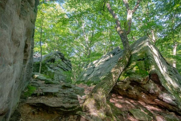 Boulders and trees at Beartown Rocks in Clear Creek State Forest