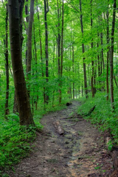 Hiking in Braddock's Trail Park in westmoreland County, PA