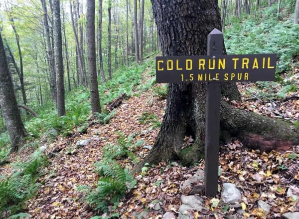 Cold Run Trail in Loyalsock State Forest, PA