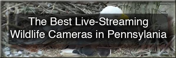 Wildlife cameras in Pennsylvania