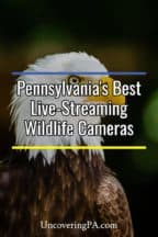 Live-Streaming Wildlife Cameras in Pennsylvania