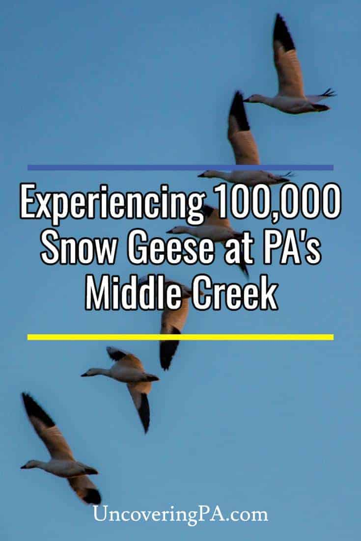 Tips for Seeing PA\'s Middle Creek Snow Geese Migration - UncoveringPA