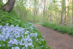 Hiking through Shenks Ferry Wildflower Preserve in Lancaster County, PA