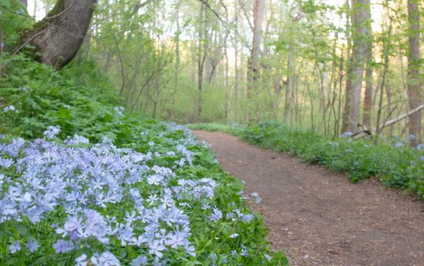Hiking at Shenks Ferry Wildflower Preserve in Lancaster County, PA