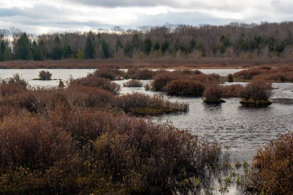 Hiking in Black Moshannon State Park
