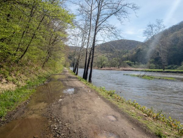 Owassee Road in Tioga State Forest