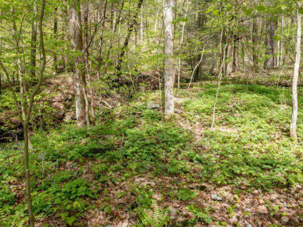 Land around Owassee Slide Run in Tioga County, PA