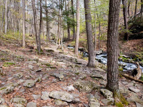 Trail on Pond Run Creek at Bushkill Falls