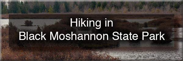 Hiking at Black Moshannon State Park