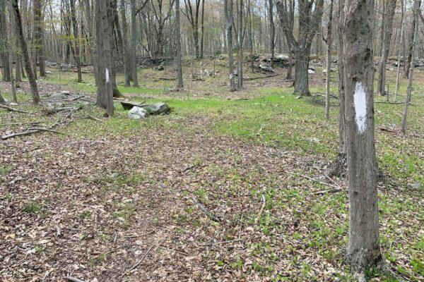 Trails at Camp Hidden Falls in the Poconos