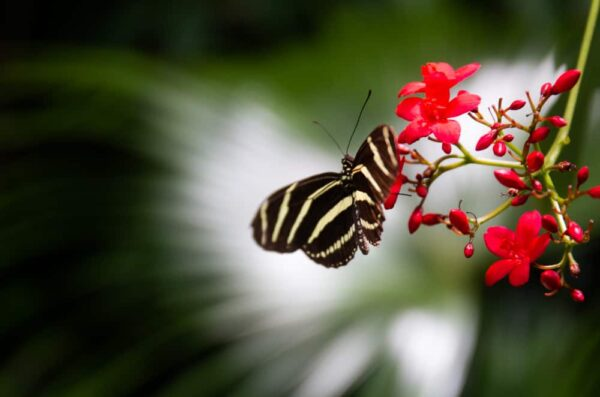 Butterfly at Phipps Conservatory and Botanical Gardens in Pittsburgh, Pennsylvania