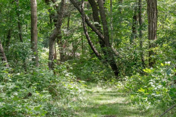 Hiking trails in Presque Isle State Park