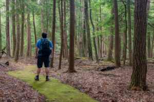 Hiking the Emerald Paved Trail in Cook Forest State Park