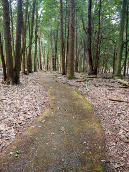 Paved Trail in Cook Forest State Park