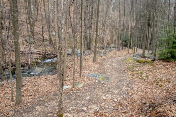 Round Island Run Trail in Sproul State Forest