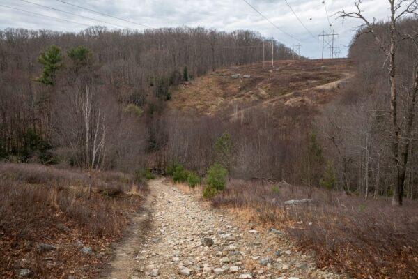 Trail to Round Island Run Falls near the Quehanna Wild Area