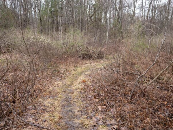 A trail through the Scotia Barrens near State College, PA