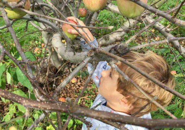 Boy apple picking in Harrisburg PA