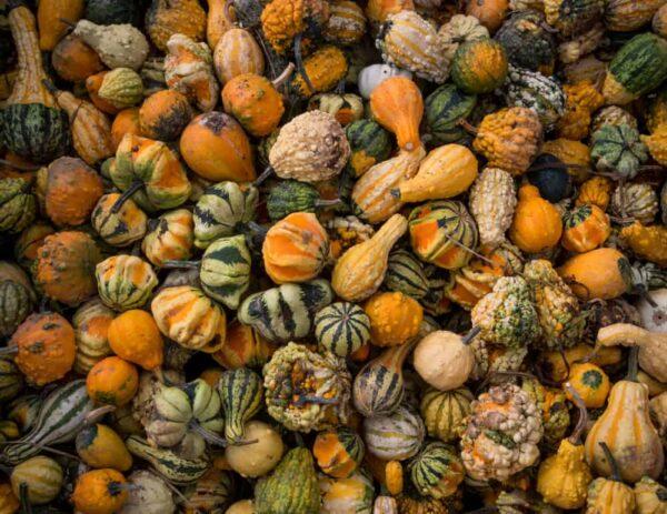 Gourds in a bin