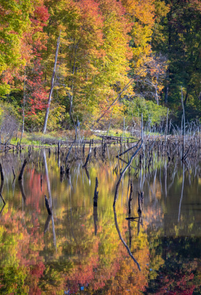 Fall colors reflecting in a pond at Moraine State Park in Pennsylvania