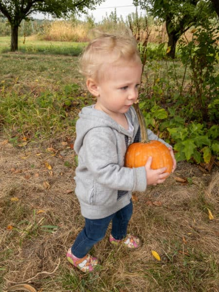 Girl going pumpkin picking at Paulu's Orchard in York County Pennsylvania