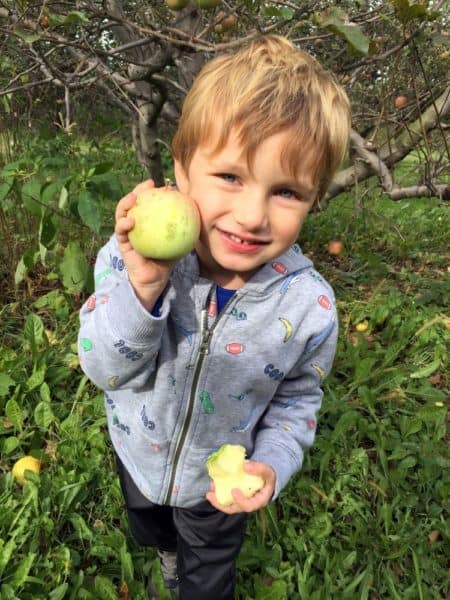 Boy apple picking in PA