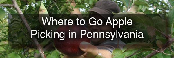 Where to go apple picking in PA