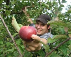 21 Great Orchards for Apple Picking in PA