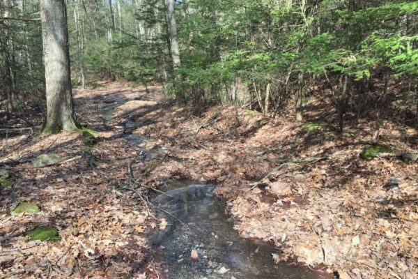 Trail to Little Shickshinny Falls in Luzerne County Pennsylvania