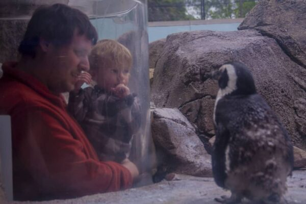 Inside the penguin enclosure at the National Aviary in Pittsburgh, PA