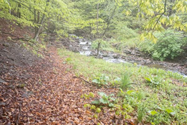 Trail to Lost Falls in PA's State Game Lands 140