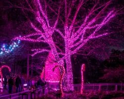 LumiNature at the Philadelphia Zoo: Holiday Lights with a Twist