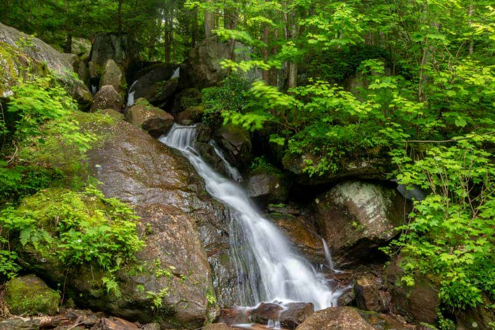 Bent Run Falls in the Allegheny National Forest