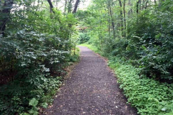 Davis Trail in Nay Aug Park in Scranton PA