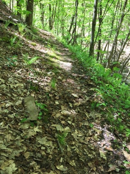 Trail to Pine Island Run Falls in Tioga County PA