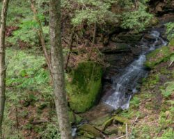How to Get to Plum Dungeon Falls in Oil Creek State Park