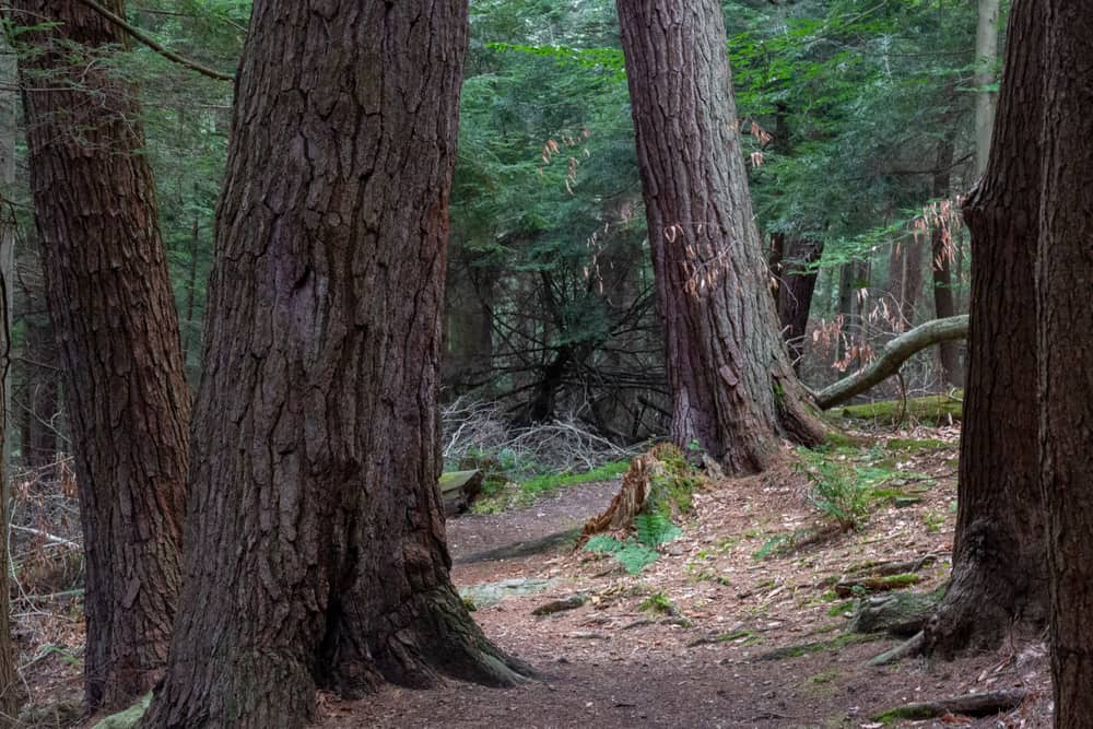 The best things to do in Cook Forest State Park in Pennsylvania