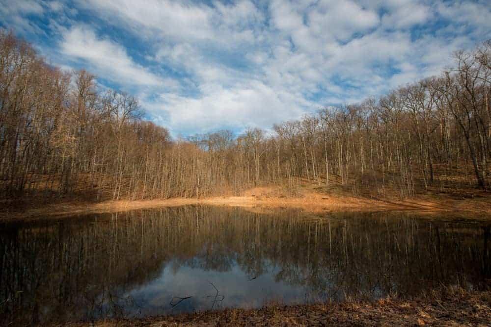 The pond at Boyd Big Tree Preserve near Harrisburg, PA